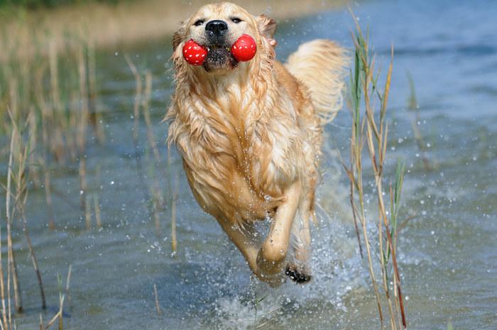 Mascotour your pet friendly travel agency for traveling - Verdecora mascotas ...